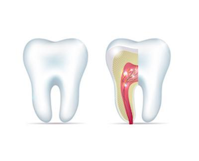 Diagram of Tooth | Dentist Coffs Harbour