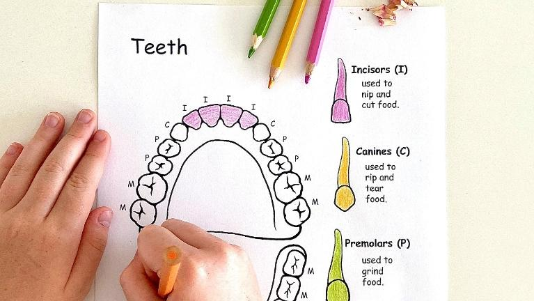 Coloring Teeth Worksheet | Coffs Harbour Dentist
